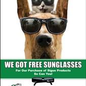 Sigue Sunglasses Promo